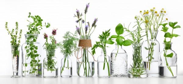 kraeuter-pflanzen